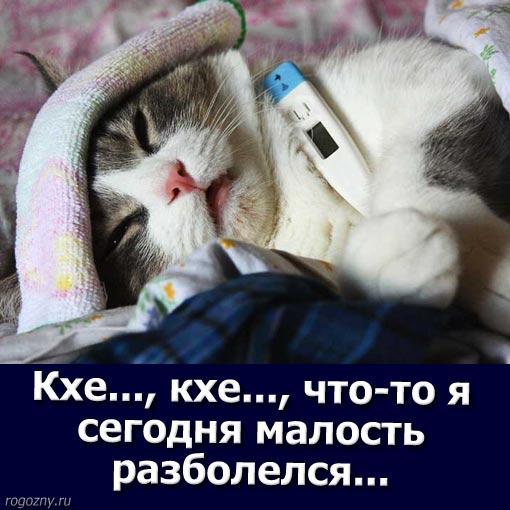 cat13