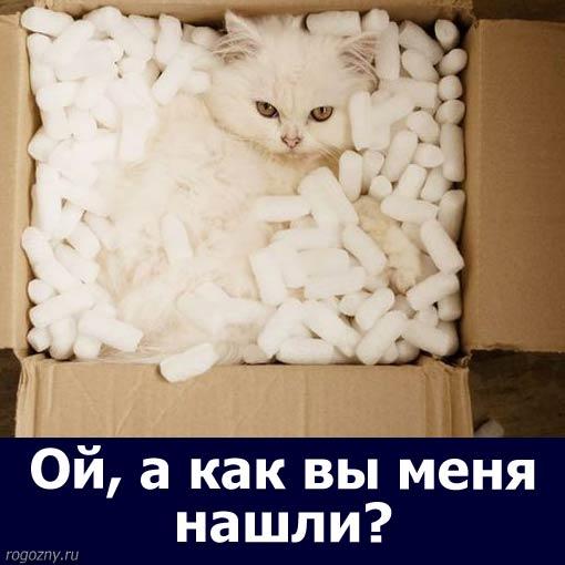 cat34