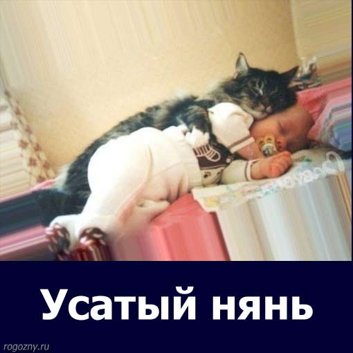 cat39