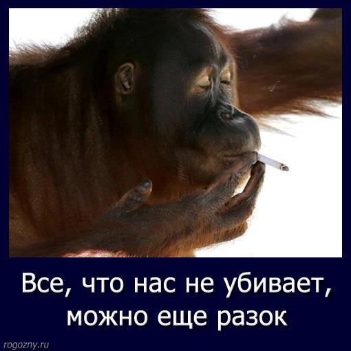 prikol-12