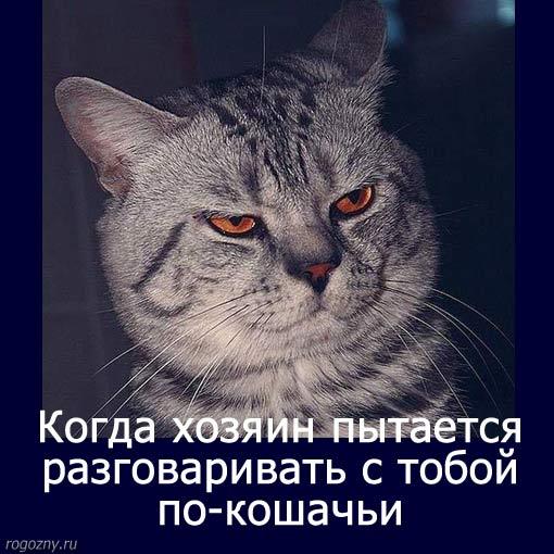 prikol-17