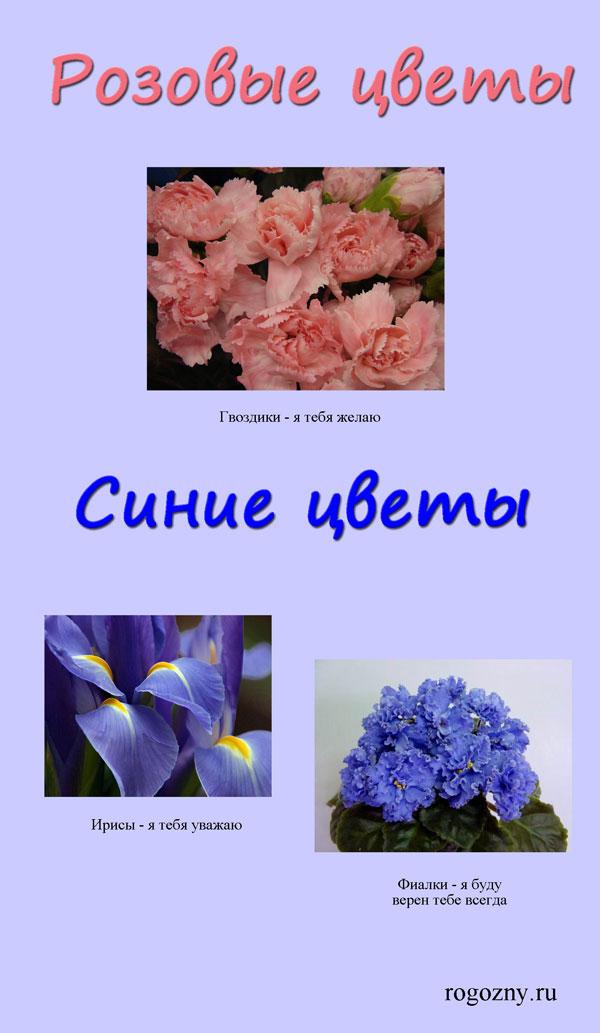 cveti3